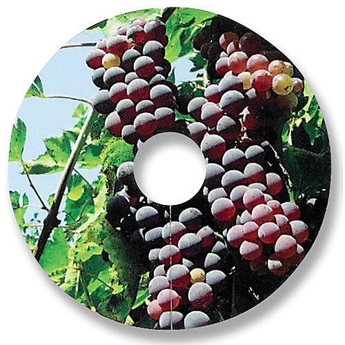 Compostable Wine Glass Tag