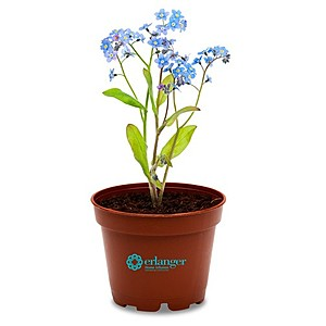 Wee Terra Cotta Planter Kit